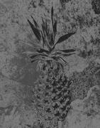 8th Feb 2020 - pineapple