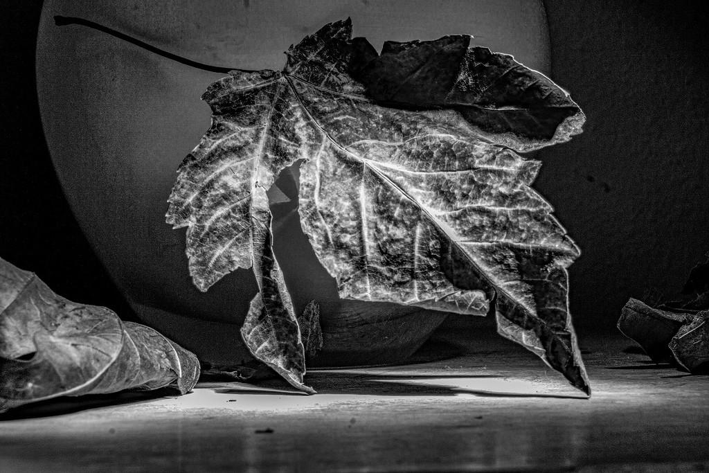 dried leaf by granagringa