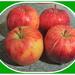 Four Gala apples.