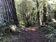 8th Feb 2020 - Camping at Jed Smith Redwoods