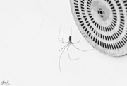 9th Feb 2020 - Incy Wincy Spider