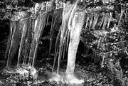 8th Feb 2020 - Nature's Black and White