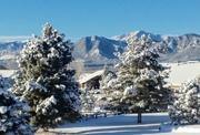 8th Feb 2020 - Snowy Morning