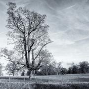 9th Feb 2020 - Lone Tree
