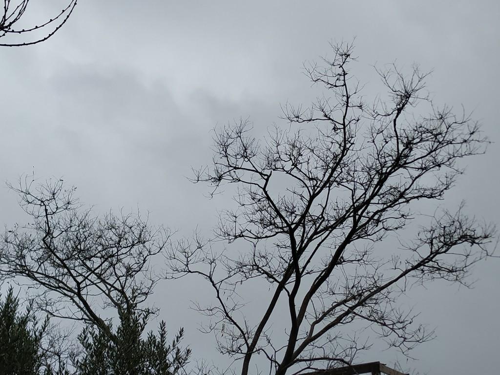 Winter Sky by shilohmom