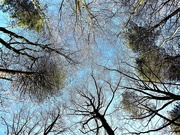 21st Jan 2020 - Sea of Trees - Part #4