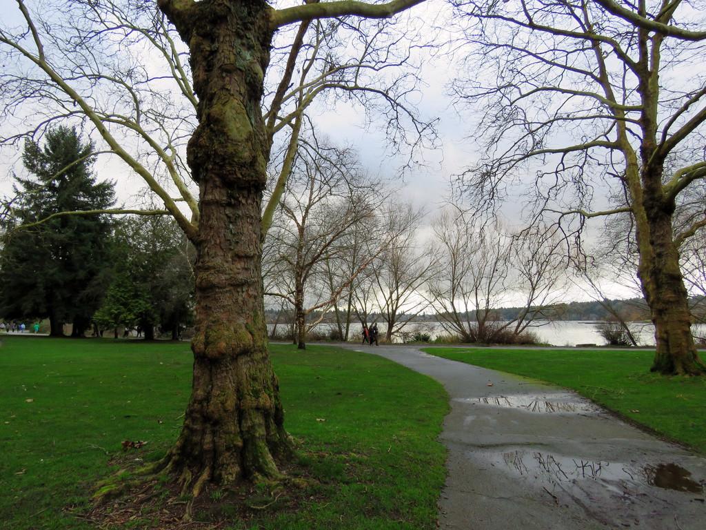 Green Lake Path by seattlite