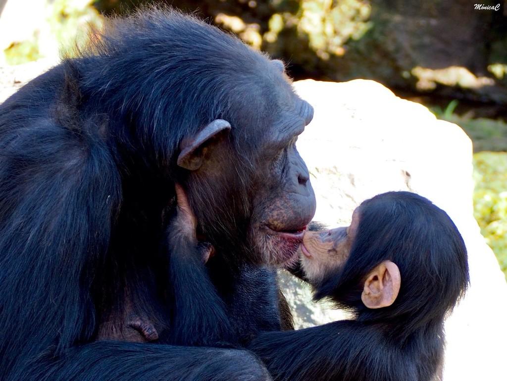 Kissing mummy by monicac
