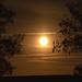 Tonight's Moon Rise!