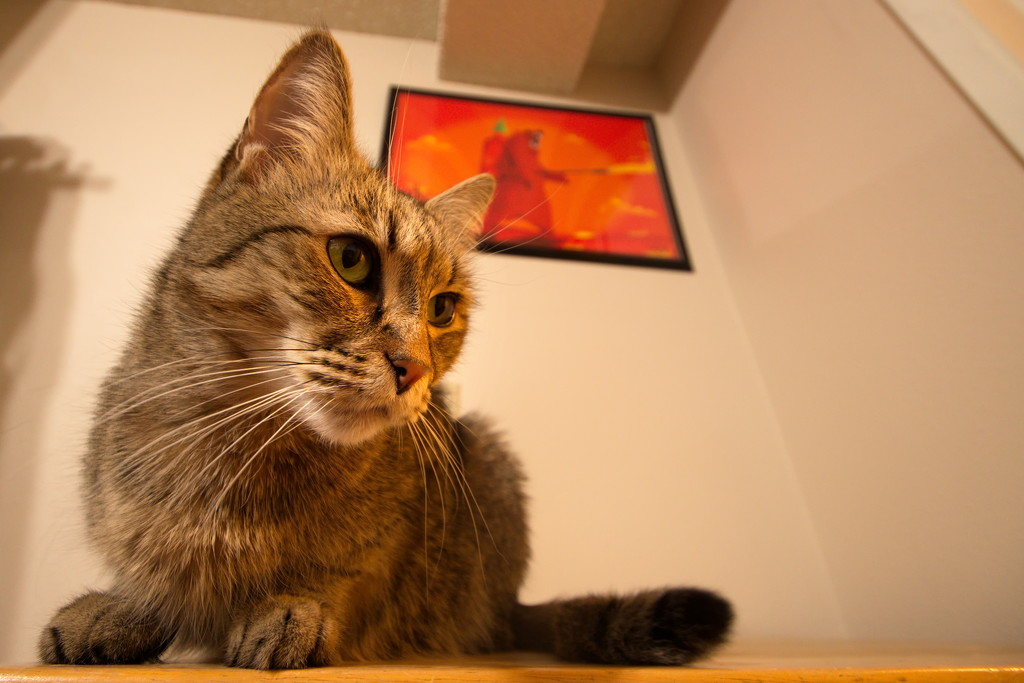 Cat in the macro corner by teriyakih