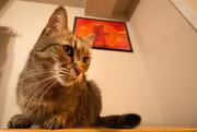 9th Feb 2020 - Cat in the macro corner