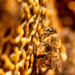 Bee on the honeycomb by yorkshirekiwi