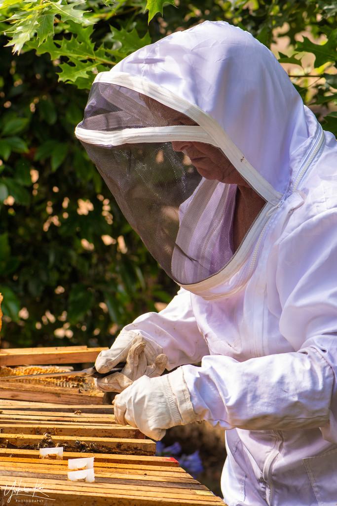 Beekeeper at work by yorkshirekiwi