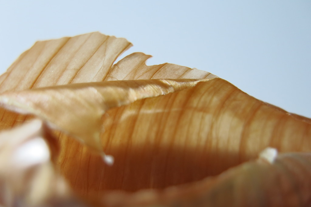 Onion skin by lmsa