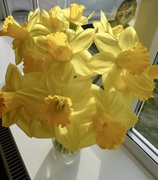 10th Feb 2020 - Sunshine and daffs