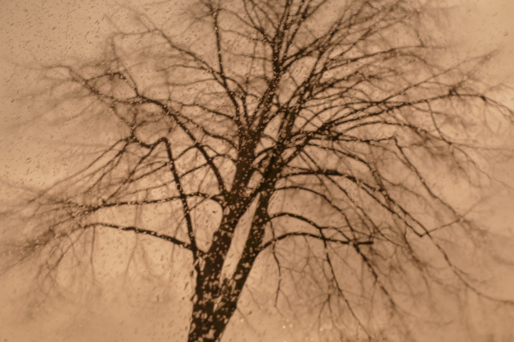 tree in the storm by marijbar