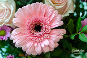 10th Feb 2020 - Pink Gerbera