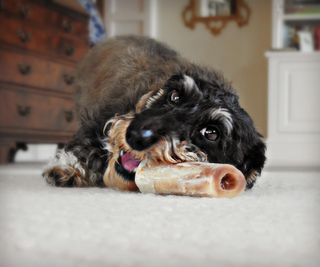Knick Knack Paddy Whack Give A Dog A Bone by ddw