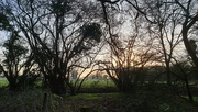 9th Feb 2020 - Daybreak on the edge of the woods