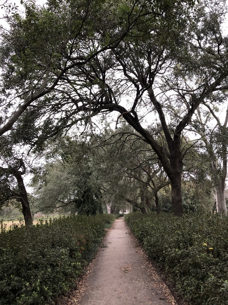Path through the park by congaree