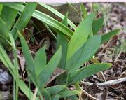 10th Feb 2020 - Spring greens