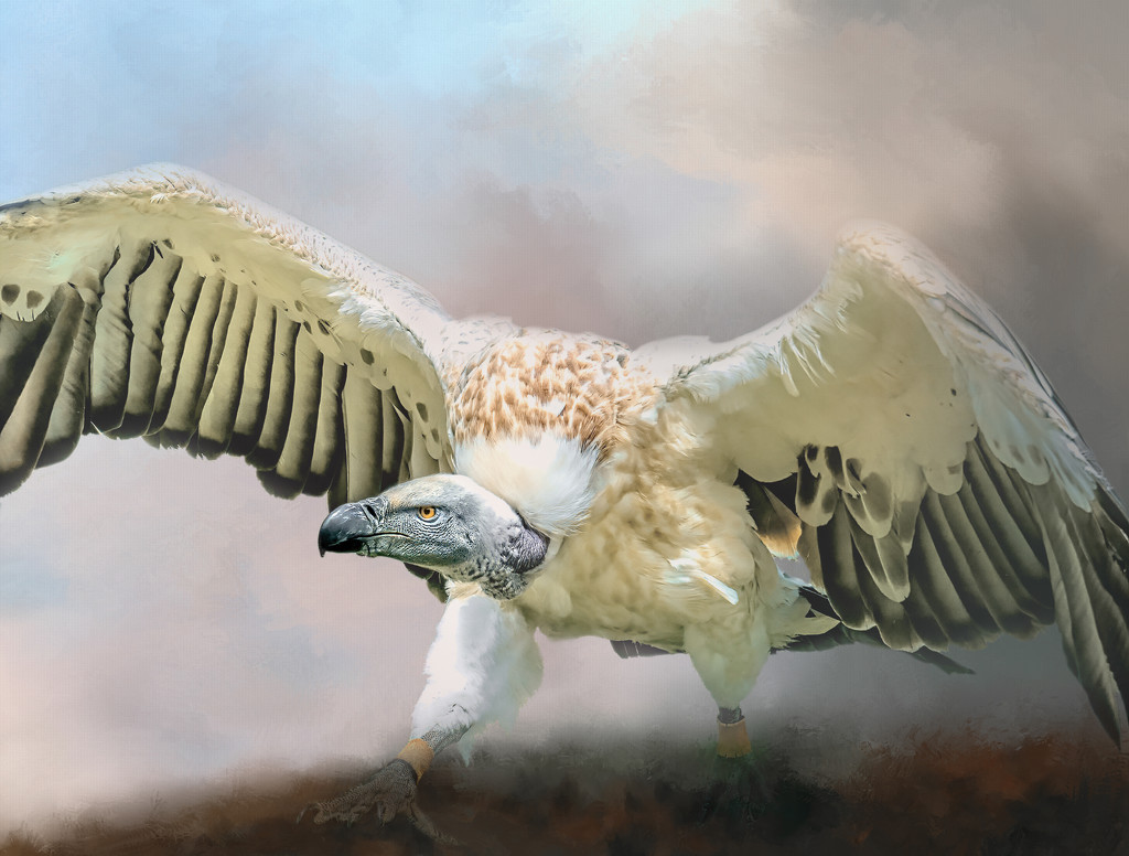 Cape Vulture  by ludwigsdiana