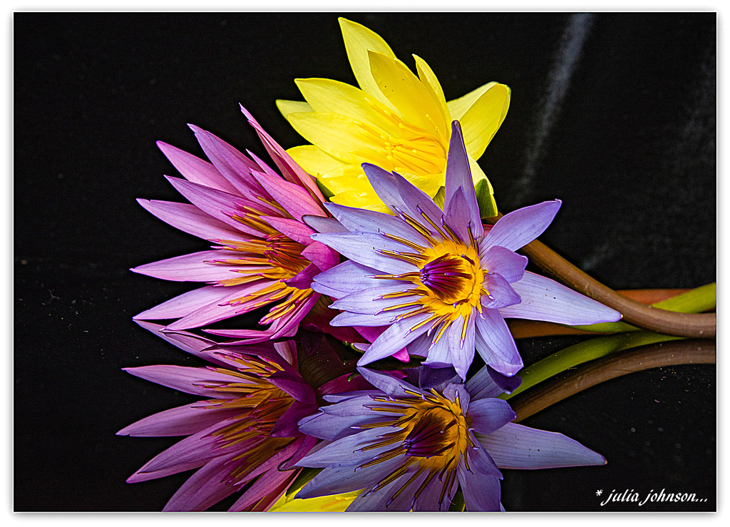 Water Lilies .. by julzmaioro