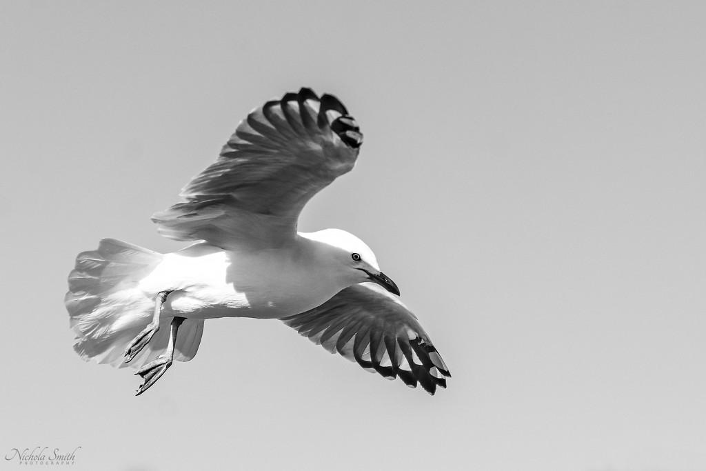 Flight by nickspicsnz