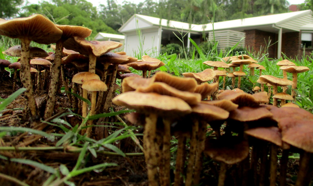 Fungus after the rain by 777margo
