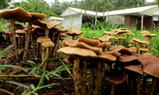 11th Feb 2020 - Fungus after the rain