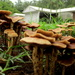 Fungus after the rain