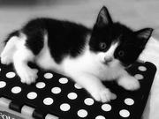 11th Feb 2020 - A Kitten Is
