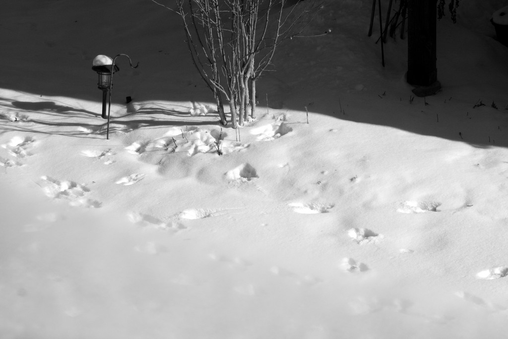 Squirrels footprints in the deep snow by bruni