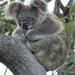 balancing trick by koalagardens