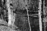 9th Feb 2020 - Reflections in the creek