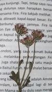 2nd Feb 2020 - Flowers