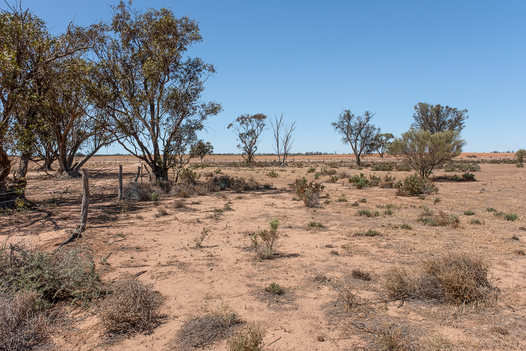 Drought by golftragic