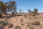 12th Feb 2020 - Drought