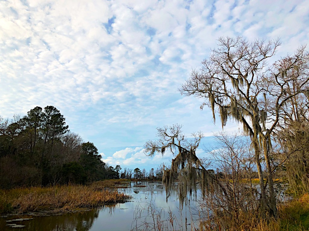 Scene at Magnolia Gardens on a recent afternoon. by congaree