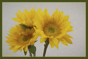8th Feb 2020 - Sunflower Painting