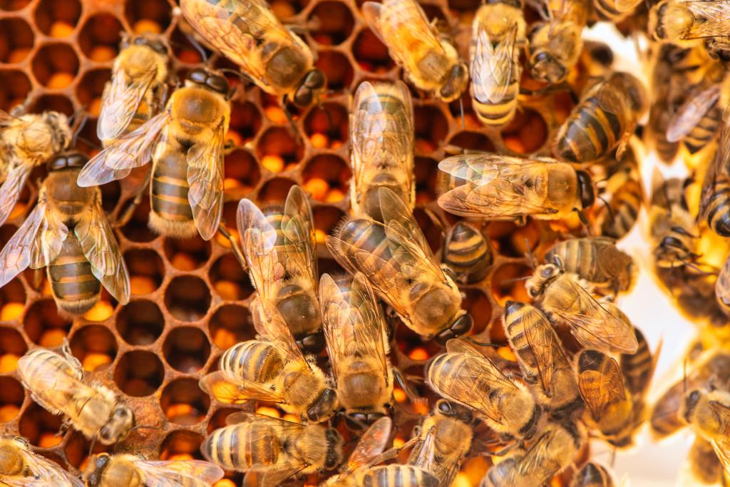 Honeycomb by yorkshirekiwi