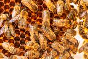 12th Feb 2020 - Honeycomb