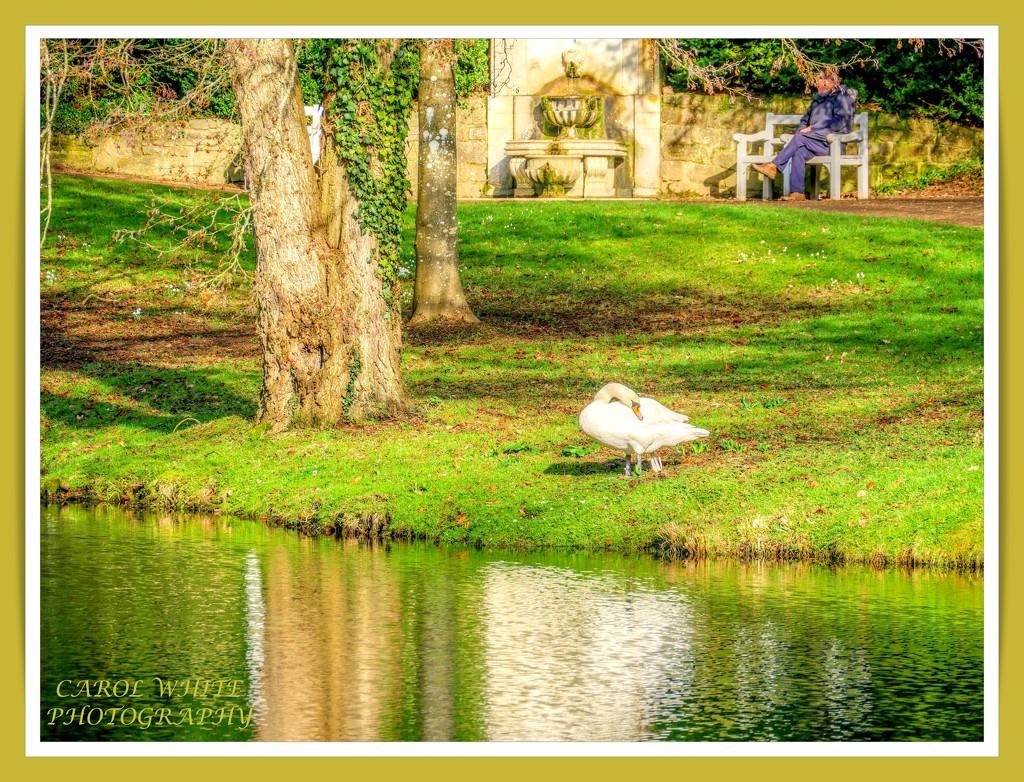 A Peaceful Spot by carolmw