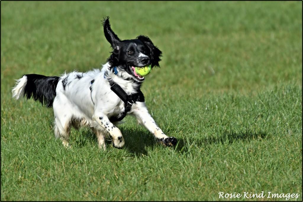 Zac's got the ball by rosiekind