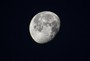 12th Feb 2020 - Waning moon