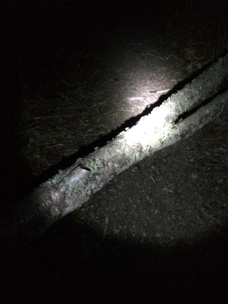 Fallen Birch and Boo by huvesaker