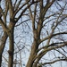 Tipsy Tree