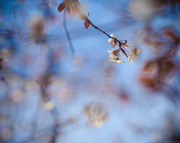 12th Feb 2020 - b b b blossom