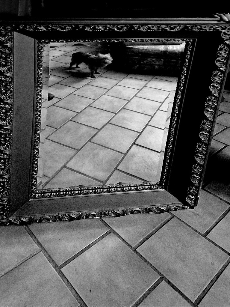 Doggie in the mirror by francoise