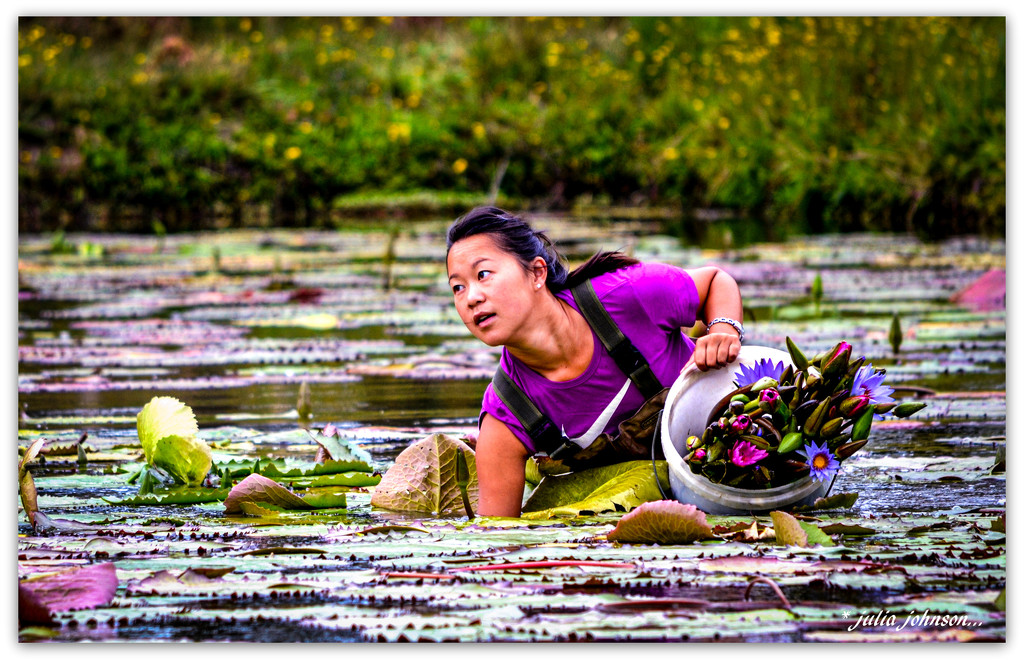 Picking water lilies.. by julzmaioro